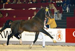 228 Zinovo<br />KWPN hengstenkeuring 2003<br />Photo © Dirk Caremans