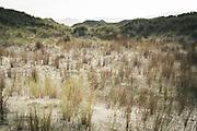Old dunes by Killbride, The Southern Circuit, Stewart Island / Rakiura, New Zealand Ⓒ Davis Ulands | davisulands.com