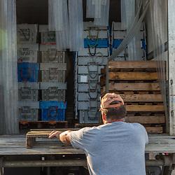 Friendship Lobster Co-op president Jim Wotton (left) helps load lobsters onto a customer's truck in Friendship, Maine.