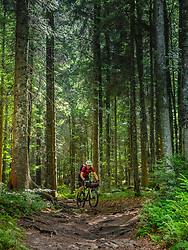 Mountain biker riding amidst woods of Black forest, Hinterzarten , Baden-Wuerttemberg, Germany