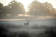 © Licensed to London News Pictures. 05/10/2014. Richmond, UK Sunrise in Richmond Park this morning, 5th October 2104, as temperatures fall after an unusually warm start to autumn. Photo credit : Stephen Simpson/LNP