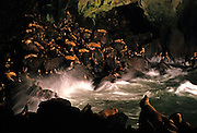 Image of Sea Lion Caves in Florence, Oregon, Pacific Northwest by Randy Wells