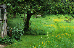 Mown grass path leading to bench through meadow area filled with buttercups