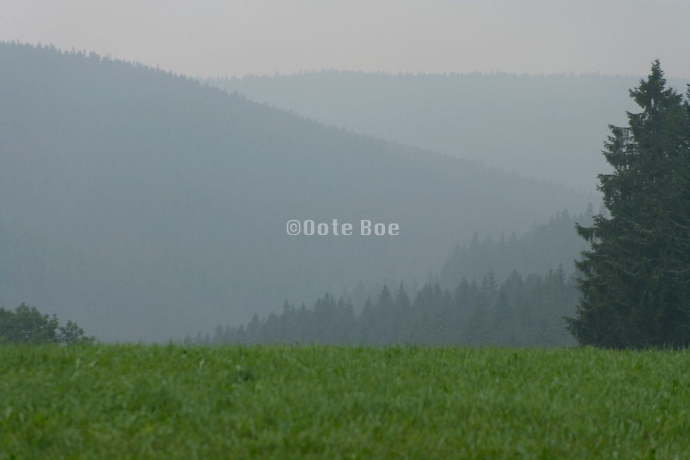 early morning fog Black forest Germany