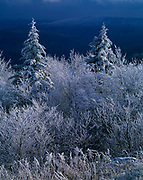 Departing storm with rime ice on red spruce and other alpine vegetation, Yew Mountains, Monongahela National Forest, West Virginia.