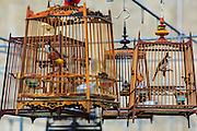 30 OCTOBER 2012 - YALA, YALA, THAILAND:  Caged songbirds wait for a songbird contest to start in Yala, province of Yala, Thailand. Bird singing contests are popular in Thailand, Malaysia and Indonesia. Owners call to their birds to try to make them sing better, while judges grade the birds on the clarity of its call. The songbird contest season is January to July, but small contests are held throughout the year.      PHOTO BY JACK KURTZ