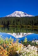 Wildflowers under Mount Rainier from Reflection Lake, Mount Rainier National Park, Washington