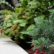 Private Gazebo in Brooklyn garden
