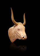 The Minoan clay bull's head rhython lbation vessel,  Palaikastro 1500-1450 BC; Heraklion Archaeological  Museum, black background .<br /> <br /> If you prefer to buy from our ALAMY PHOTO LIBRARY  Collection visit : https://www.alamy.com/portfolio/paul-williams-funkystock/minoan-art-artefacts.html . Type -   Heraklion   - into the LOWER SEARCH WITHIN GALLERY box. Refine search by adding background colour, place, museum etc<br /> <br /> Visit our MINOAN ART PHOTO COLLECTIONS for more photos to download  as wall art prints https://funkystock.photoshelter.com/gallery-collection/Ancient-Minoans-Art-Artefacts-Antiquities-Historic-Places-Pictures-Images-of/C0000ricT2SU_M9w