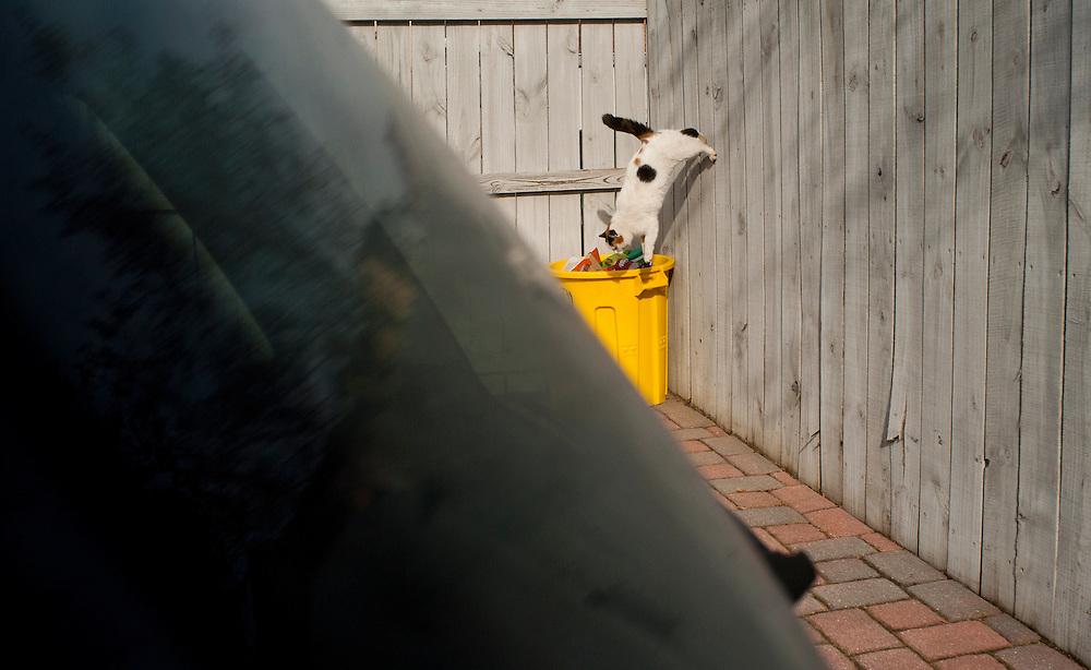 (photo by Matt Roth)..Neighbor Cats Wednesday, January 5, 2011..