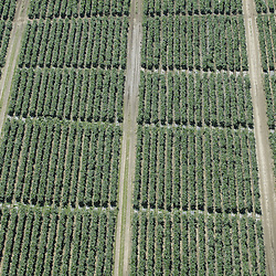 aerial view of farm rows of vegetables