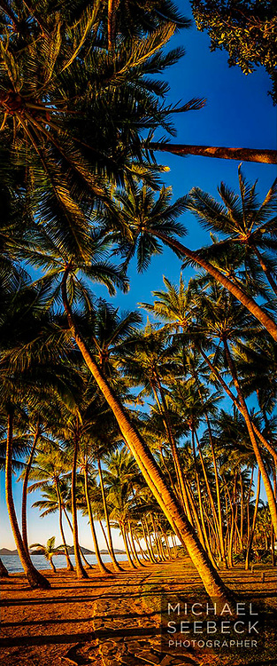 A vertical panoramic image of the coconut palms at Palm Cove, captured on a perfect morning.<br /> <br /> Limited Edition of 125