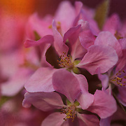 """Temptation with Brocade"" <br />