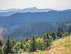 Mountain biker riding amidst forest towards Belchen summit seen from the Feldberg, Hinterzarten, Baden-Wuerttemberg, Germany
