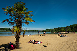 © Licensed to London News Pictures. 14/06/2021. LONDON, UK.  People near a palm tree sunbathe on the beach at Ruislip Lido in north west London.   The forecast is for the temperature to rise to 28C, the hottest day of the year so far.  Photo credit: Stephen Chung/LNP