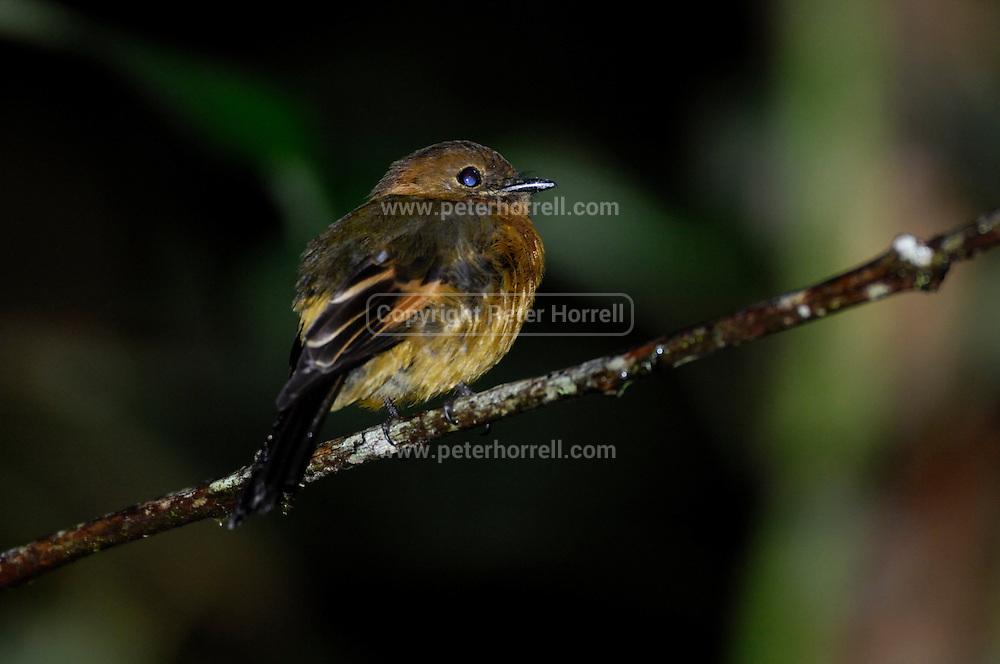 Ecuador, May 22 2010: Images from Cabanas San Isidro...Copyright 2010 Peter Horrell