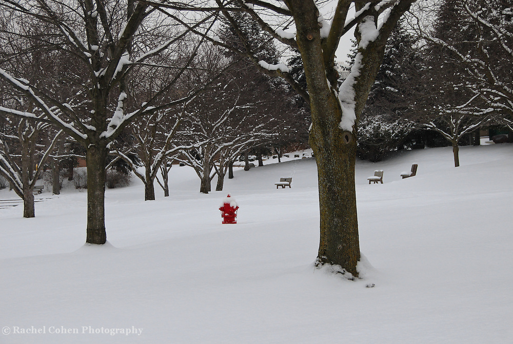 """""""Little Red""""<br /> <br /> A wonderful bright red fire hydrant shines in this beautiful snowy winter scene!!<br /> <br /> Winter in Michigan by Rachel Cohen Winter in Michigan!<br /> <br /> Beautiful winter scenes, winter wonderlands, and lone trees in winter!<br /> <br /> Images in color, B&W, and using selective color.<br /> <br /> If you love winter, snow, trees, rolling hills, and lone trees then you'll find a lovely selection!! <br /> <br /> Winter in Michigan by Rachel Cohen"""