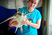 Senior Zoe Goldstone works with turtles during her summer internship at the Karen Beasley Sea Turtle Rescue and Rehabilitation Center in Topsail Island, NC.