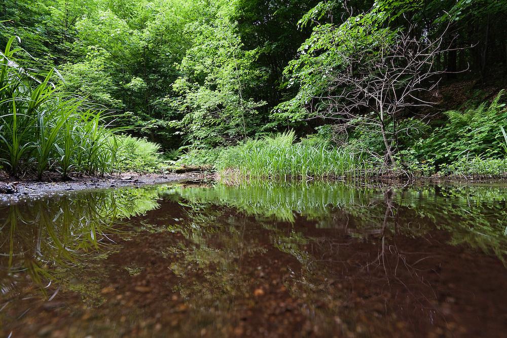 Reflections, Morske Oko Reserve, Vihorlat Mountains, Western Carpathians, Eastern Slovakia, Europe