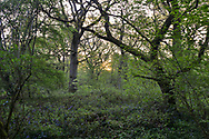 Stoke Woods, Bicester, Oxfordshire owned by the Woodland Trust