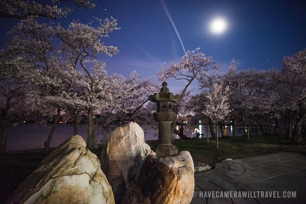 A night shot of the 17th century Japanese lantern next to the Tidal Basin amongst the flowering cherry blossoms in Washington DC.