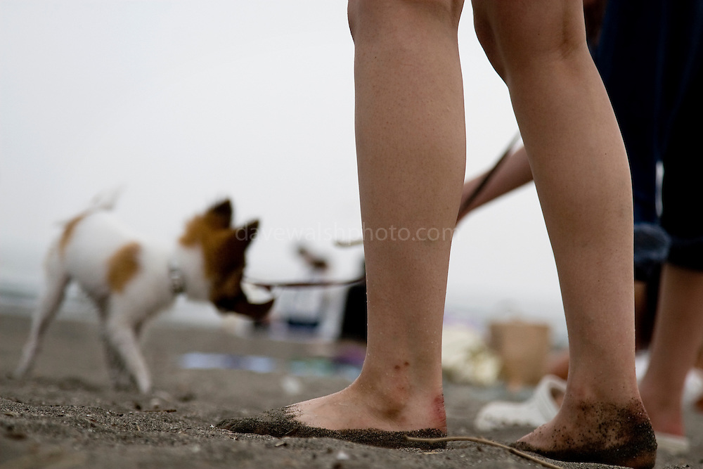 Dog the beach at Kamakura, Tokyo, Japan. Taken as candid, with the camera sitting on a blanket, letting autofocus make the decision...