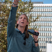 Biologist Courtney McCammon spots a red-tailed haw s circling above Wilshire Boulevard in Los Angeles, CA. A hawk nest  sits on a window ledge behind her (visible).