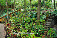 65021-03220 Shade garden with hostas, impatiens, and coleus and stairway, St Louis  MO