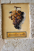 wall tile showing a bunch with noble rot chateau d'yquem sauternes bordeaux france