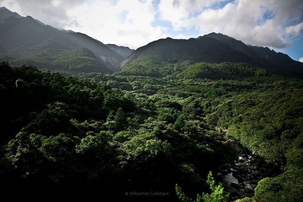 Japan, Yakushima - the deep forest view from the top, crossed by a torrent river, with a background of mountain.