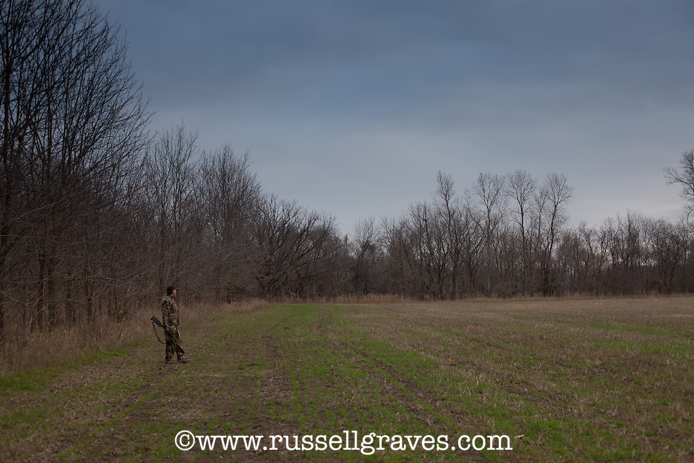 COYOTE HUNTER ALONG THE EDGE OF AN OPEN FIELD