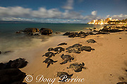 green sea turtles, Chelonia mydas ( Threatened Species ), basking at night ( illuminated by moonlight ) on sand beach, Kahana, West Maui, Hawaii, USA ( Central Pacific Ocean ), with lights of Ka'anapali resort district in background