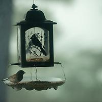 A junco eats in a bird feeder in Montara, California,