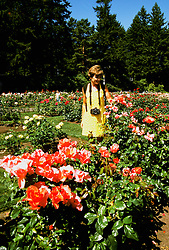 Oregon: Portland, rose garden, model released, Photo: orport102  .Photo copyright Lee Foster, www.fostertravel.com , 510/549-2202, lee@fostertravel.com