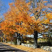 Baker Bridge Road, Lincoln, MA in full autumn color