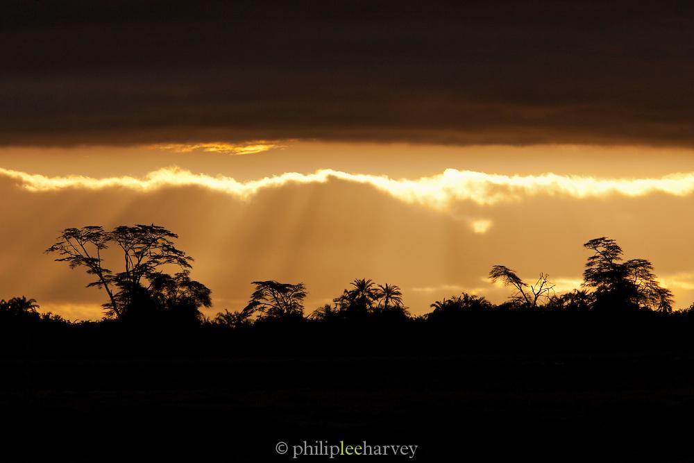 Stormy skies at dawn over the acacia trees of Amboseli National Park, Kenya