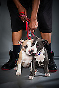 Marquis Dulan with his pit bull puppies Nolia and Sarabi.