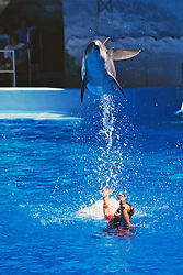 Bottlenosed Dolphin & Trainer Performing