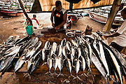 A diverse collection of fish fresh off the boats.<br /> (Photo by Matt Considine - Images of Asia Collection)
