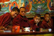 India, Ladakh region state of Jammu and Kashmir, Hemis Gompa near Leh, Young priest