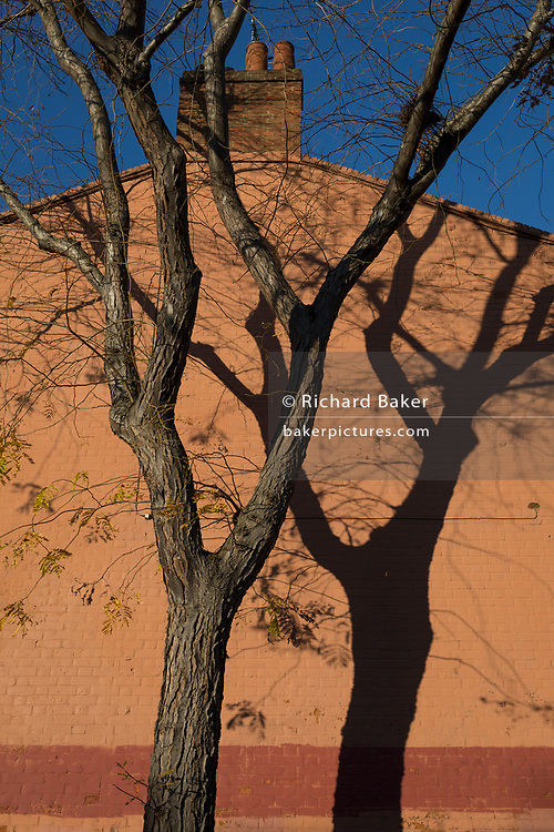 A tree in winter leaving its shadow on the end wall of a residential house in East Dulwich, in south London, England, on 4th December 2019.