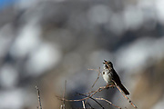 Birding photography from Lee Vining, CA, USA