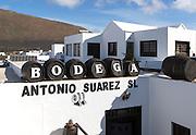 Bodega Antonio Suarez, La Geria vineyard tourist attraction for sampling and buying wine, Lanzarote, Canary Islands, Spain