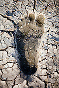 environmental concept, Water shortage and drought footprint in dry mud