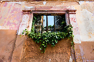 Vines and window in Cardenas, Matanzas, Cuba.