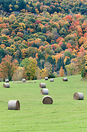 Hay bales in a farm field and fall foliage along Cross Loop Road in Chelsea, Québec, Canada.  Photographed just north of the entrance to Gatineau Park.