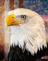 An aged and faded patriotic bald eagle with a backdrop of old glory behind.