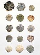 arrangement of shells same but different