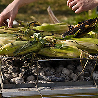 Ears of corn roasting over charcoal at an outdoor farm feast.