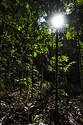The life-giving sunlight hits the forest floor of the Amazon rainforest.